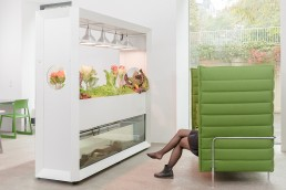 Biophilie-Raumteiler-Couch-Office